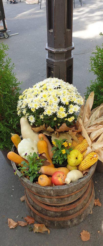 ősz termés